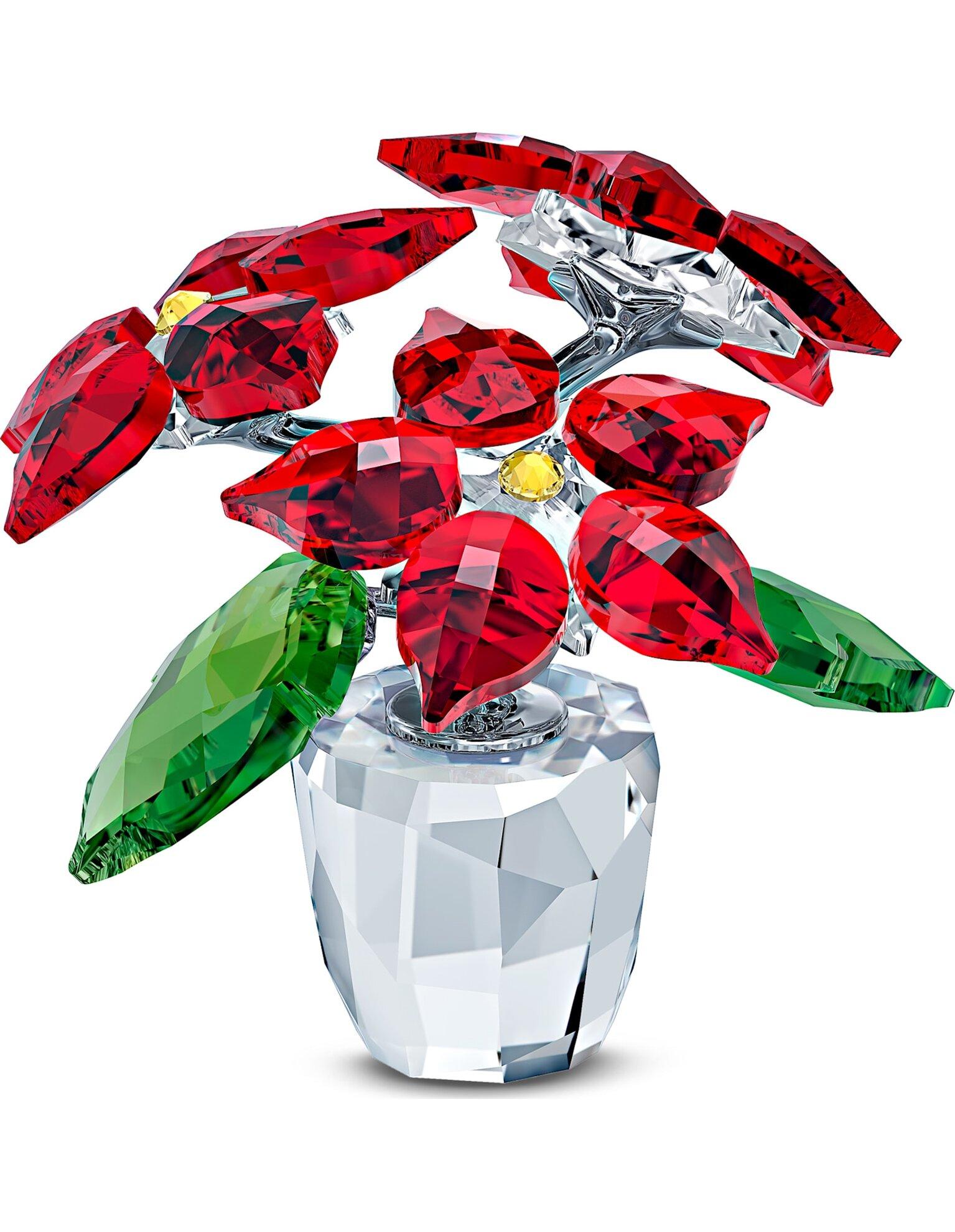 Picture of Yıldız Çiçeği